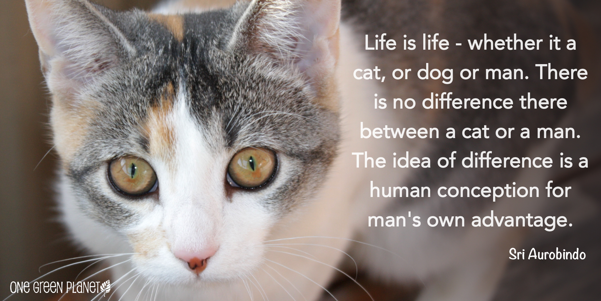 Animal Cruelty Quotes Animal Cruelty Quotes Magnificent Stop Animal Cruelty Quotes